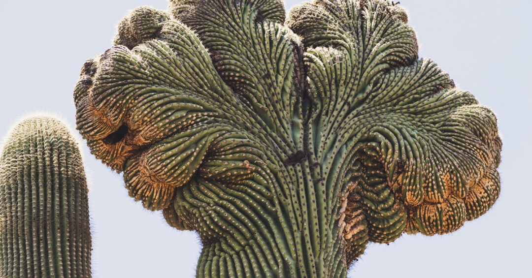 Cactus Mental Health in Workplace